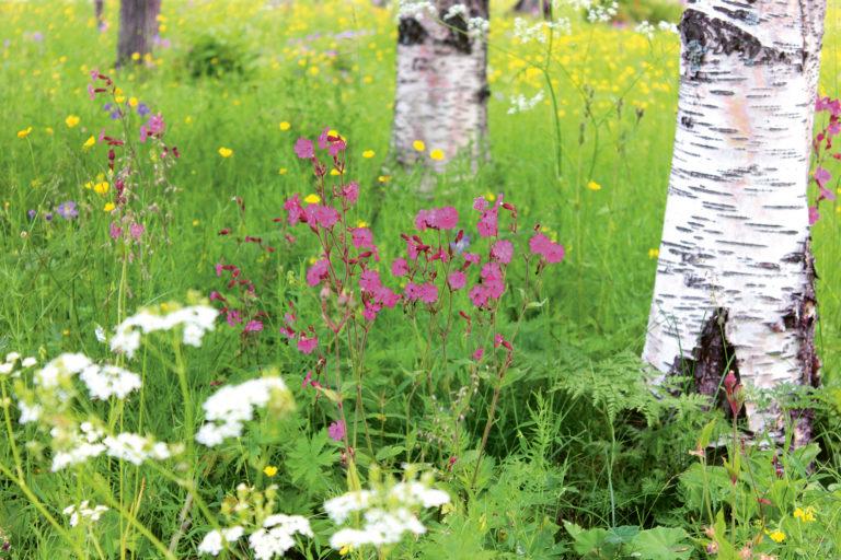 Meine Blumenwiese für Bienen, Schmetterlinge  und Co