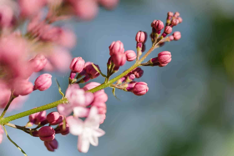 Blühende Blumen im Hofgarten in Seitenstetten